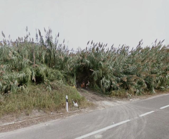Carretera de Gandía, Oliva, Valencia, Spain