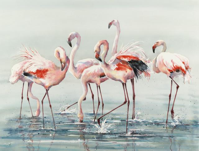 Julia Cassels, Flamingo Time