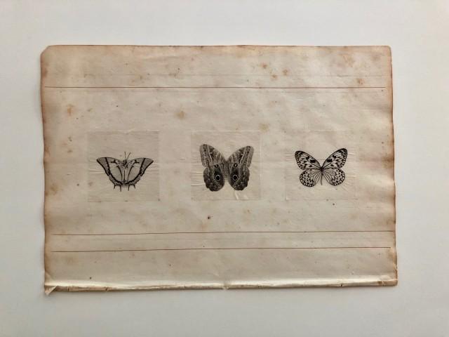 Susan Seubert, Tissue Study, 2008