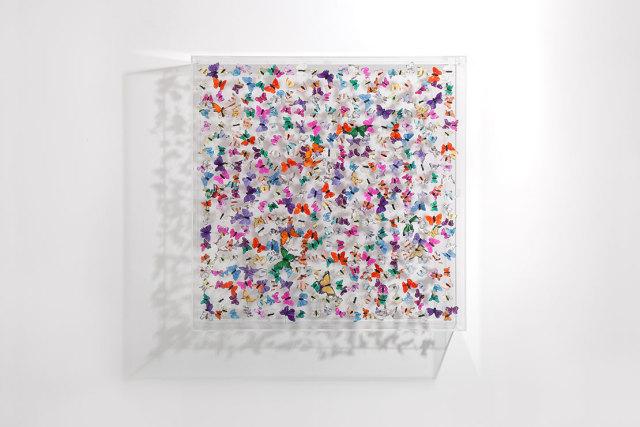 Michael Olsen, Butterflies, 2016