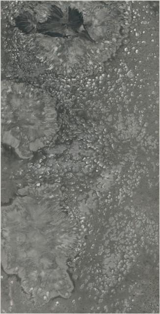 Bingyi 冰逸, Biology: Lotus Pond 生物波相:莲池, 2018