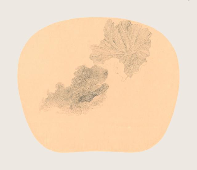 Bingyi 冰逸, Fairy of Dragonfly Lotus 蜓妖, 2012-2016