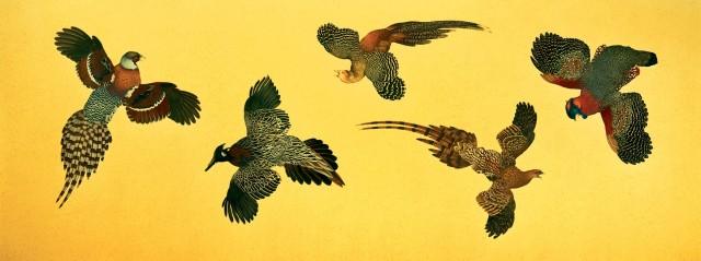 Exotic Pheasants
