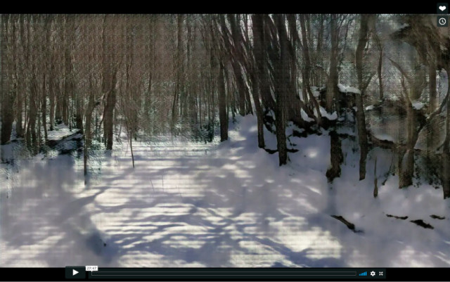 Winter Woods (Learning Nature b59e,4000,1), 2019