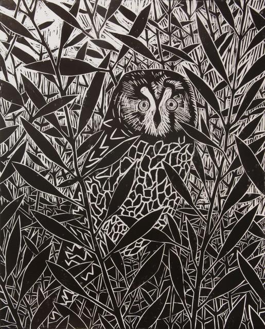 Owl at Virkie