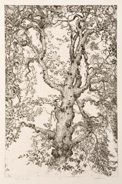 Ian Westacott, Owl Tree | Elm, Cromarty, 2017/18
