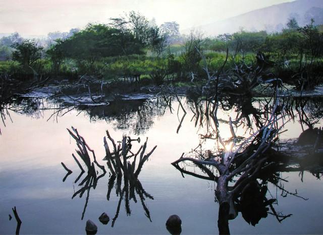 Charlotte Valley Swamp