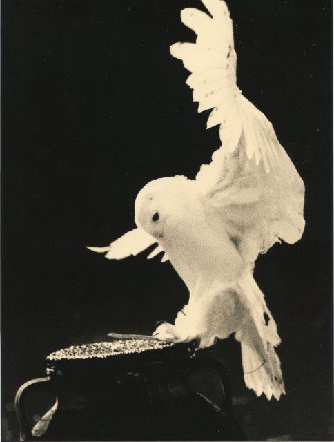 Yamamoto Masao  # 1650, 1987-2018  Toned gelatin silver print  9 x 6 ¾ inch (22.86 x 17.15 cm)  Edition of 20 (#17/20)