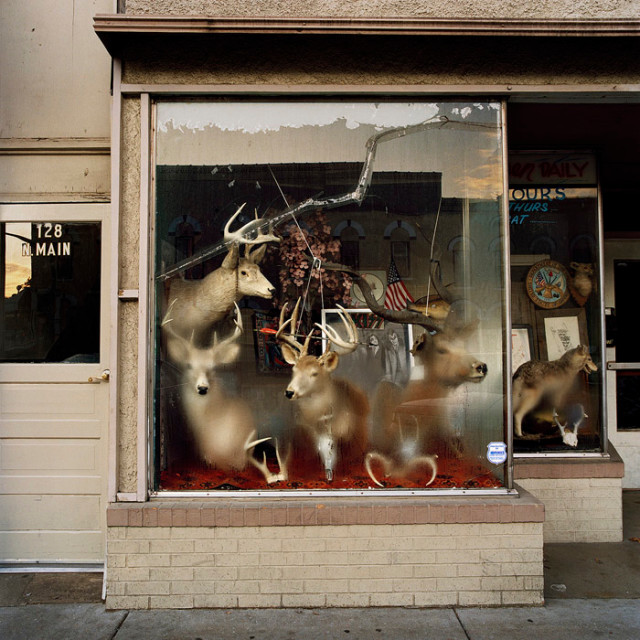 Phil Bergerson, Untitled, Martinsville, Indiana [deer heads inside foggy window], 2006