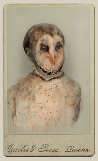 Sara Angelucci  Aviary (Barn Owl/endangered), 2013  Chromogenic print flush mounted to archival board  16 ½ x 24 ¼ inch (41.91 x 61.6 cm)  Edition of 15 (#5/15)