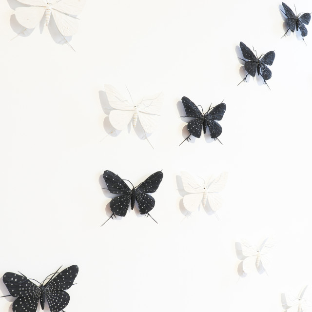 Elizabeth Thomson, From the Black & Whites, XXII , 2007/21