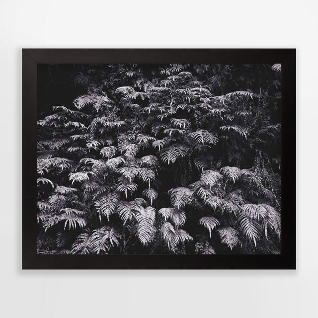 Andrew Drummond, Ferns, 2006