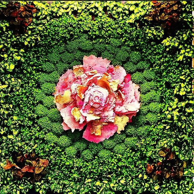 """Asso di Fiori 2016 installazione ambientale, in posa cm 200x260x30, piante acqua corrente, 5 elementi in ceramica. Stanza """"B"""", giardino verticale"""