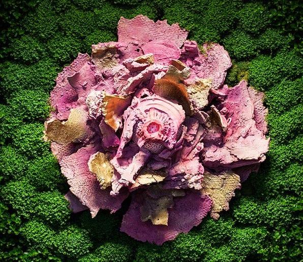 """Matteo Negri, 2016, Asso di Fiori, installazione ambientale, in posa cm 200x260x30, piante acqua corrente, 5 elementi in ceramica. Stanza """"B"""", giardino verticale."""