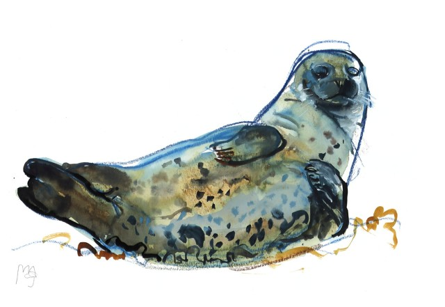 Mark Adlington , 01. Harbour Seal, Westcove, 2019