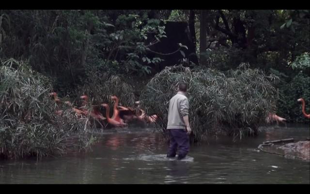 Chen Dandizi 陈丹笛子, Spring Flamingo 春日火烈鸟, Video Still 录像截图, 2016