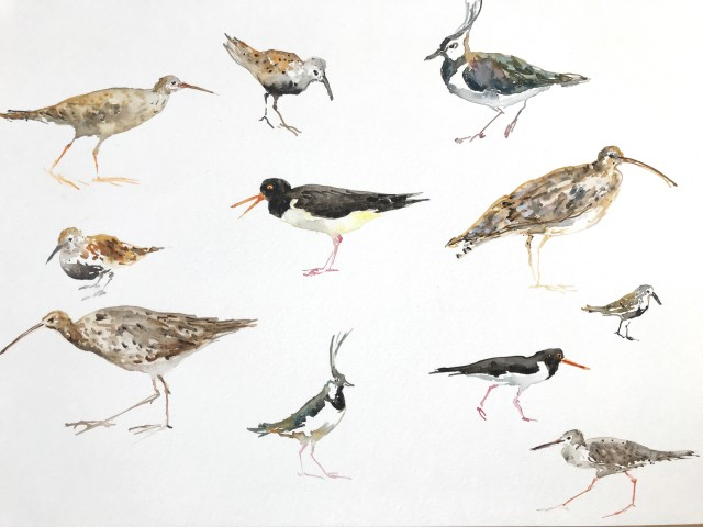 Fledge: A Year of Birds, A mixed and multidisciplinary exhibition of artworks and words