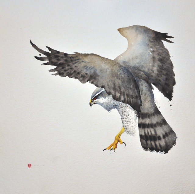 "Goshawk II  Watercolour  38"" X 38"""