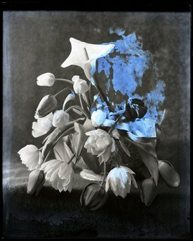 Jodie Carey, Elegy IV, 2012, Digital print from glass plate negative c.1920, (Framed) 37 x 40 cm.