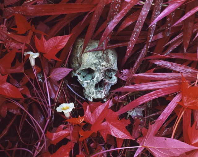 Richard Mosse, Of Lilies and Remains, 2012
