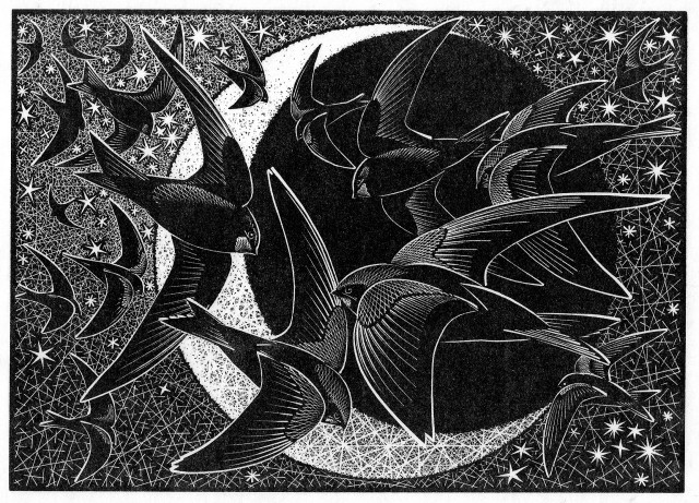Colin See-Paynton, Nocturnal Encounters - Swifts, Stars and Sickle Moon