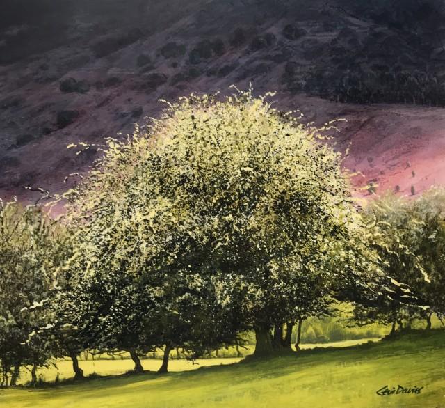 Ceri Auckland Davies, Tree with Crimson Mountain