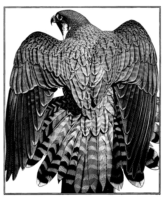 Colin See-Paynton, Peregrine Mantle
