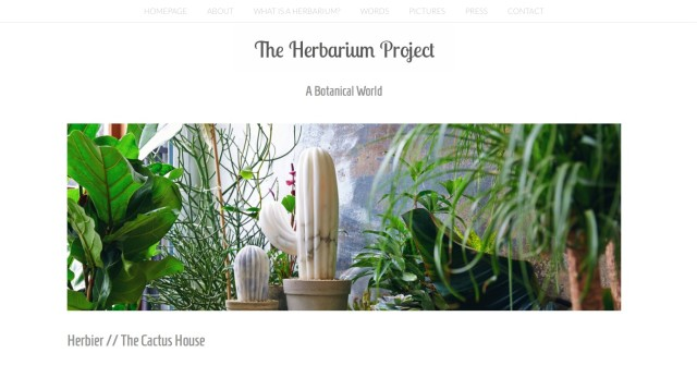 Herbier// The Cactus House