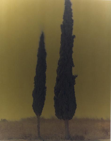 Cypress Mark #02 2005 C-Print mounted on aluminium, Edition 1 of 6 150 x 120 cm