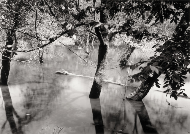 Thomas Joshua Cooper, Drowned Trees along the Mississippi, from the Source to the Sea—Hot Afternoon—Drowning Trees, the Confluence of the Dubois and the Lower Mississippi Rivers (East Bank), Madison County, Illinois, United States, 2010, selenium-toned chlorobromide gelatin silver print, 28 × 36 in., Collection Lannan Foundation, © Thomas Joshua Cooper, photo courtesy of the artist