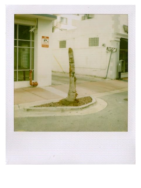 Peter Liversidge: Miami Proposals (special edition)