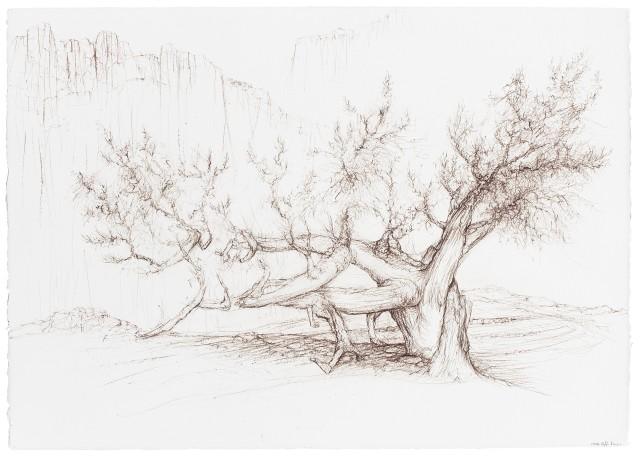 Raffi Kaiser, Portaits of Trees