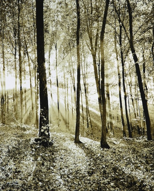 Mark S Payne  Woodland Light  £3,750