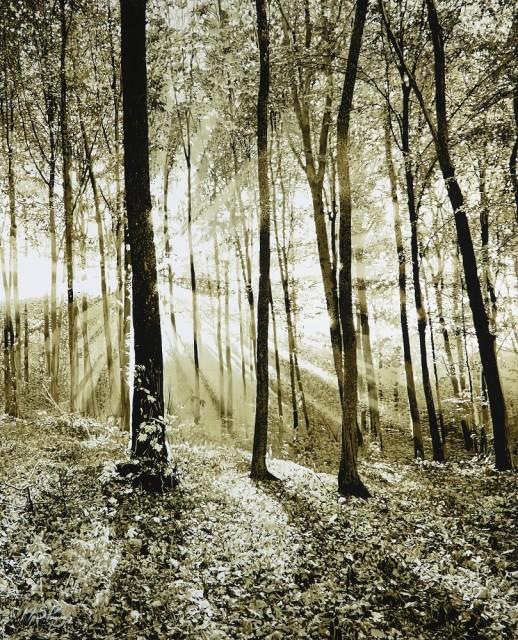 Mark S Payne, Woodland Light