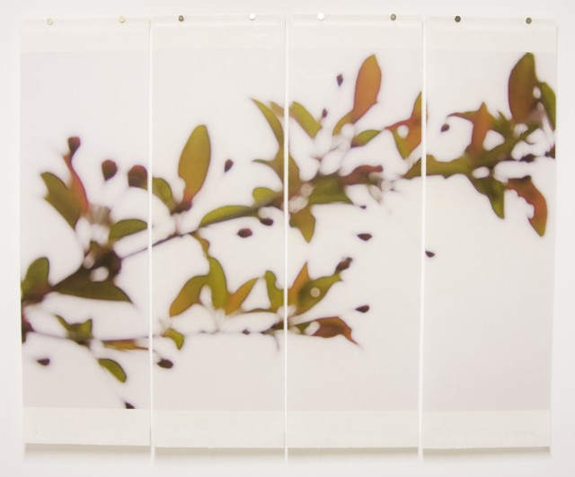 A New Leaf, A foliage-themed exhibition