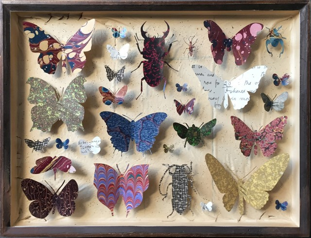 Entomology Case 10 by Helen Ward