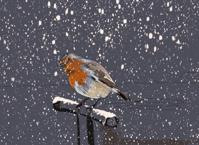 Polzeath Robin Charity Christmas Card