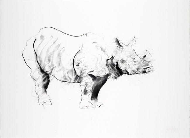 Rhino I, 2013