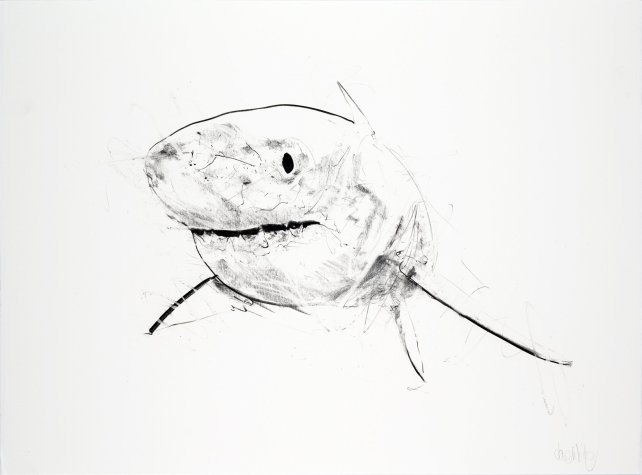 Great White IV