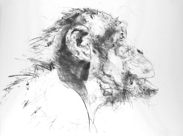Chimp VI, 2017