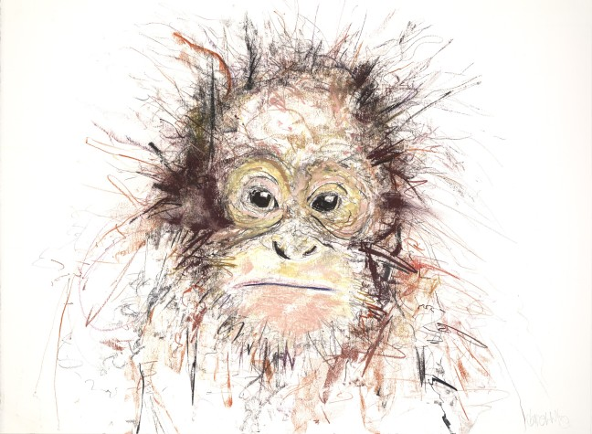 Orangutan III, 2016