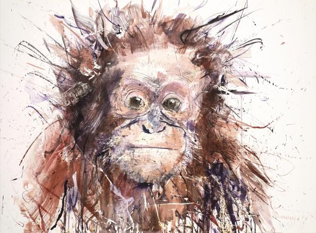 Orangutan V