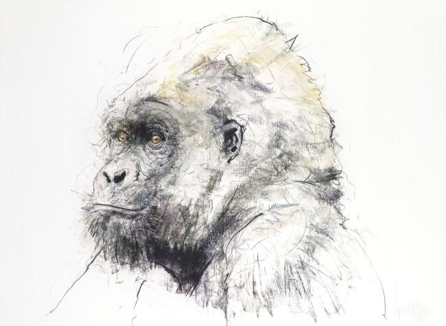 Gorilla II, 2016