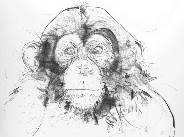 Chimp IV , 2017