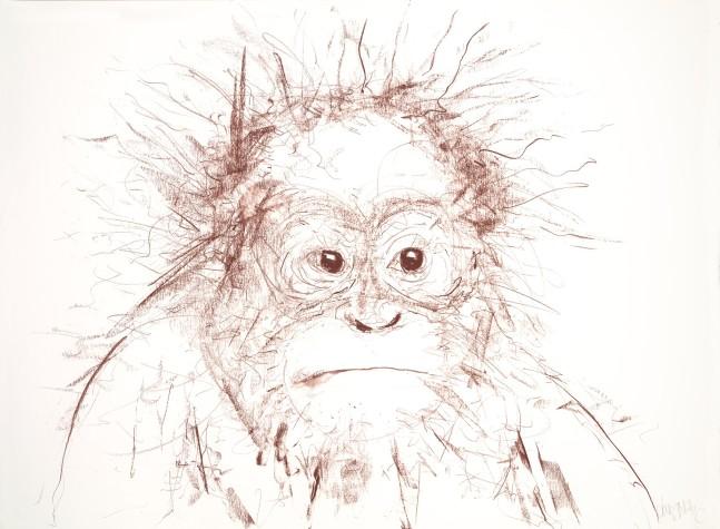 Orangutan II, 2016