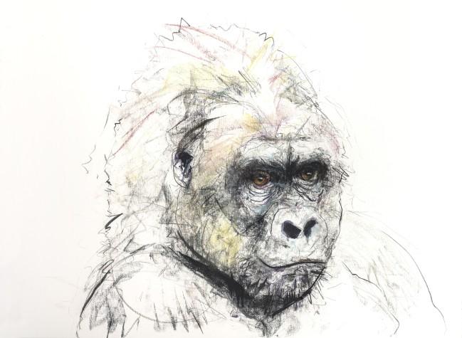 Gorilla V, 2016