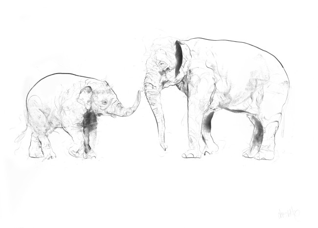 Elephant and Calf , 2017