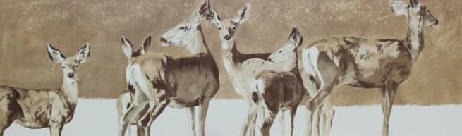 Deer Run Skies