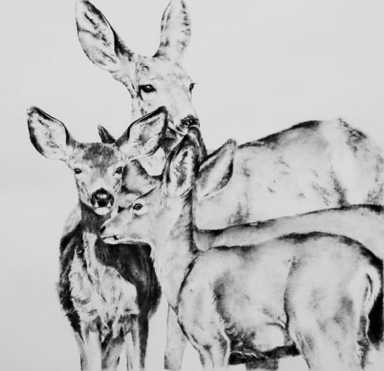 Deer Run Blossom