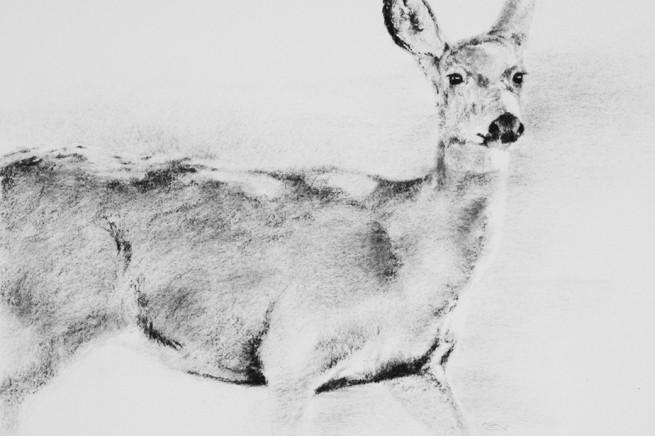 Deer Run Catalpa